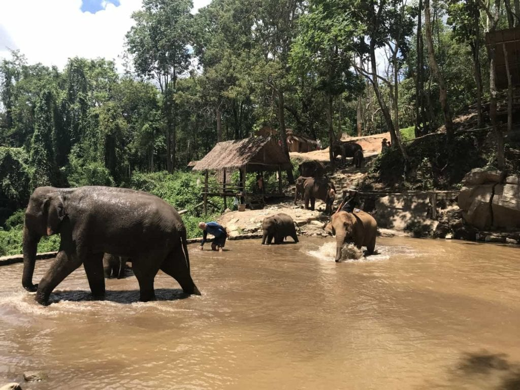 Rescue Elephants In The River In Chiang Mai Hills