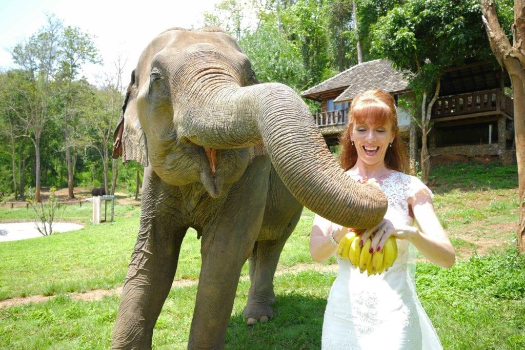 Tegan Marshall Feeding Rescue Elephants At Chiang Mai Sanctuary In The Wandering Wedding Dress