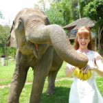 Tegan Marshall Feeding Rescue Elephants At Chiang Mai Sanctuary In The Wandering Wedding Dress