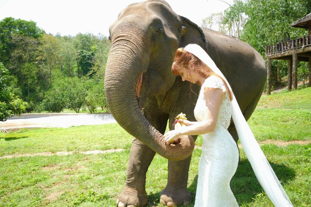 Tegan Marshall Loves Elephants In Thailand Chiang Mai And The Wandering Wedding Dress