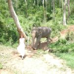 Tegan Marshall Taking Her Pet Elephant For A Walk In A Wedding Dress