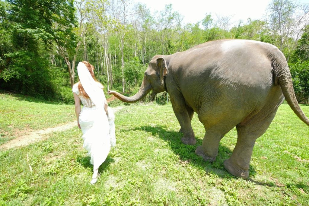 Tegan Marshall Walking With An Elephant From Chaing Mai Elephant Rescue