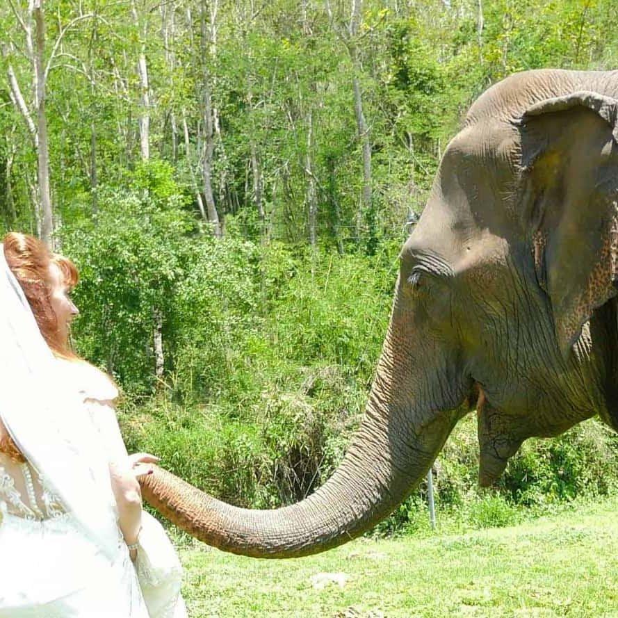 Tegan Marshall Walking With Her Friendly Elephant