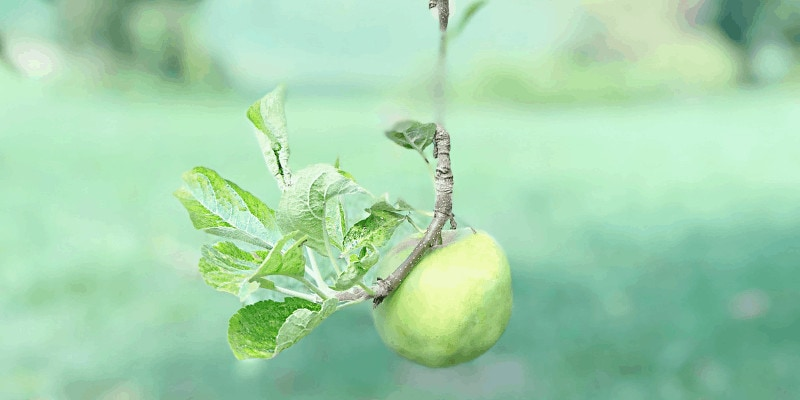 Increase Revenue By Low Hanging Fruit By Tegan Marshall